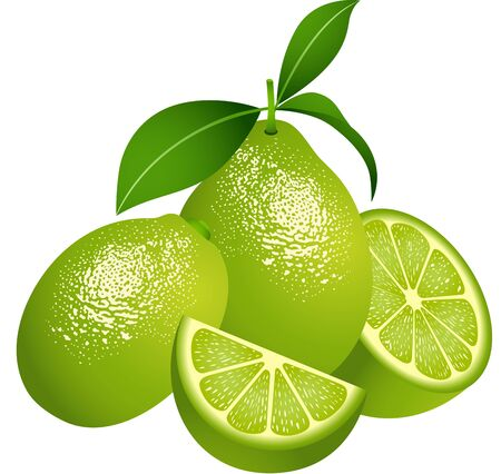 lemon slice: Juicy green citrus fruit Illustration