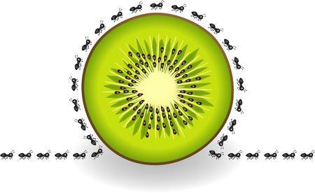Les fourmis autour tranche de kiwi