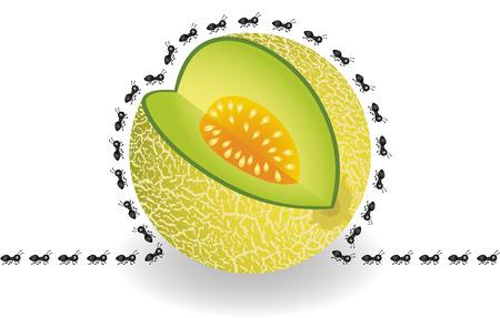 melon: Ants around cantaloupe melon slice
