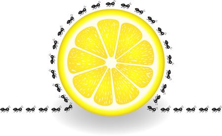lemon slice: Ants around lemon slice
