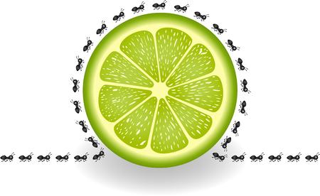 lime slice: Ants around lime slice