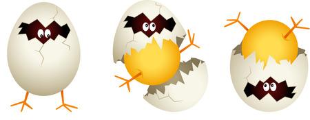 chick: Chick cracked egg shell Illustration