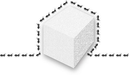 sugar cube: Ants around sugar cube