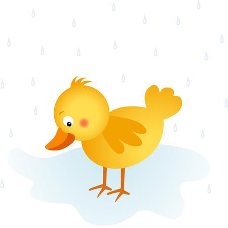 chick: Springtime rain chick