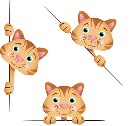 kitty cat: Cute cat peeking from behind in various positions