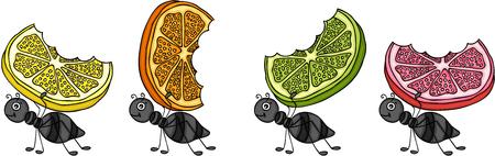 Ants carrying citrus fruit slices. Ilustrace
