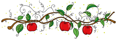 Apple orchard fruit picking branch