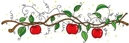 Apple orchard fruit picking branch