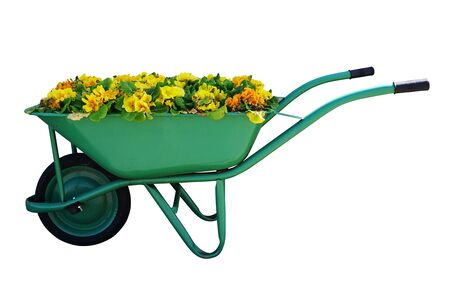 Green garden cart overflowing with small yellow flowers Stok Fotoğraf