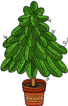 Green pine tree in vase