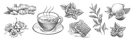A collection of tea items on a white background. Isolated hand drawing.