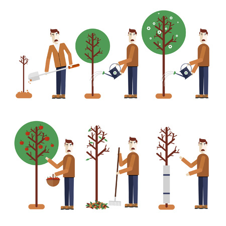 Happy Gardener standing with his garden tool. Elements of infographics. Gardening. Tree sits down collect apples watering removes leaves tree wraps. Vector illustration. Flat design. Vector