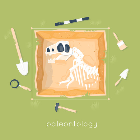 paleontology: Paleontology, the archaeological site of dinosaur remains. Ancient fossils. Dinosaur age. Education and science. Skeleton fossil. Flat design vector illustration. Illustration