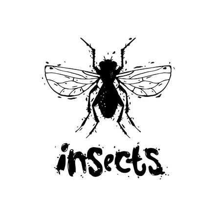 unsanitary: Insects, flies, unsanitary. Hand draw. Black on white, lettering. Flat design vector illustration.