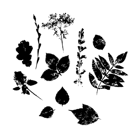 Set silhouettes of leaves black. Hand drawn vector illustrations on white background. Modern flat style.