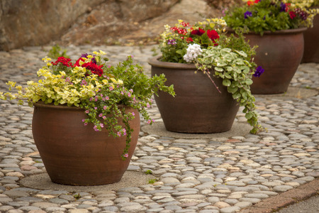 Pretty row of flowered patio pots