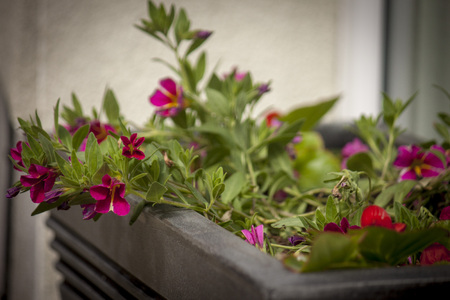 Summertime window box of flowers
