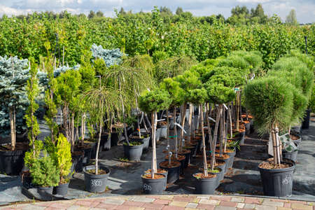 Garden shop for the sale of plants. Here you can buy a lot of varieties of green plants: various flowers, fir, spruce
