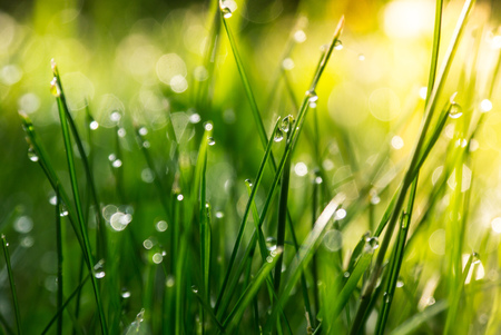 Grass. Fresh green spring grass with dew drops closeup. Sun. Soft Focus. Abstract Nature Background Stock Photo