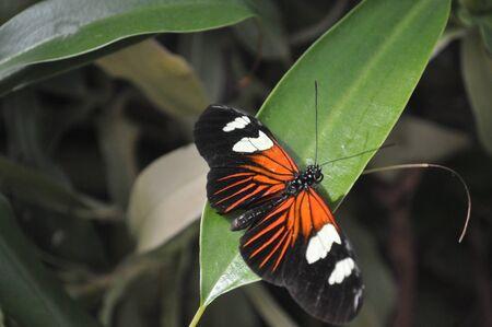pavillion: Butterfly Pavillion