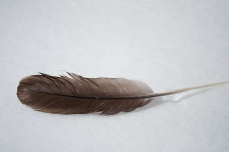 feather in the snow
