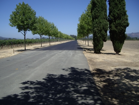 wine road: road in wine country, Napa