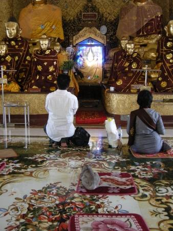 worshiping: cat worshiping at Shwedagon Pagoda