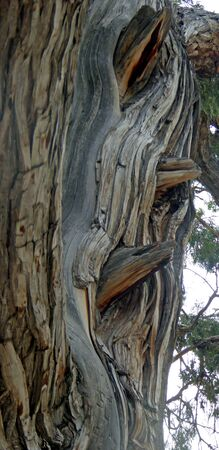 vegatation: Birds in the ancient tree Stock Photo