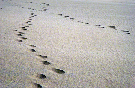 foot steps: Foot steps in the sand