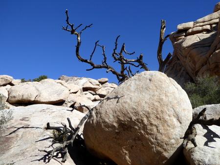 arboles secos: bolders entrelazados con los �rboles muertos