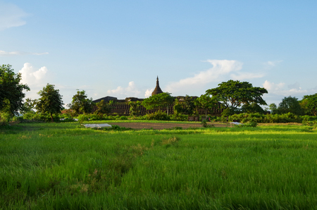The Koe-thaung temple in the background of green rice fields and trees in warm afternoon light in Mrauk U, Rakhine State, Myanmar