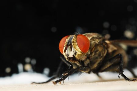 Close up of a fly Stock Photo - 16248382