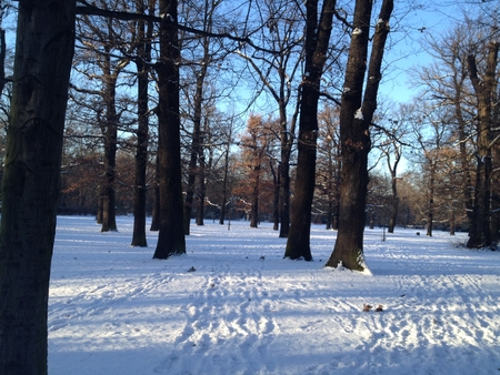 Beautiful Winter Scenery in Berlin Park Hasenheide with Snow Covered Ground, Trees, Blue Sky and Sun Light