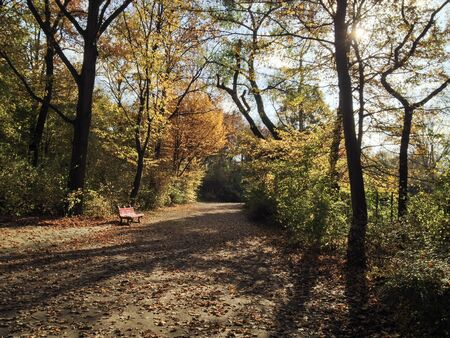 Bench in Puplic Park Hasenheide in Berlin on a sunny Autumn afternoon. Path and trees are covered in beautiful coloured leaves. Stok Fotoğraf