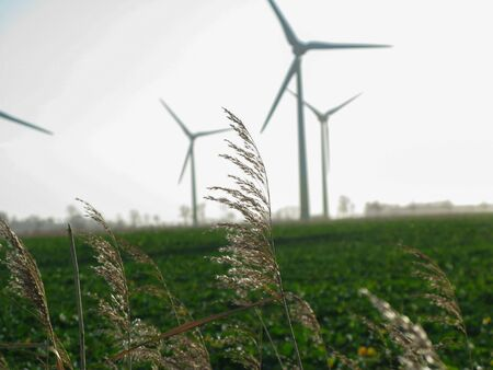 Close Up of Wheat / Grass with Wind Mills / turbines in a Wind Park in East Frisia in the Background.