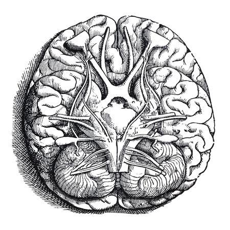 existence: Human Brain