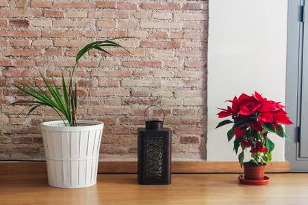 Flowers Poinsetta Detail Stock Photo