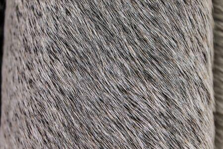 Cow Leather Texture Archivio Fotografico - 131833718