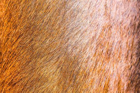 Cow Leather Texture Archivio Fotografico - 131833790