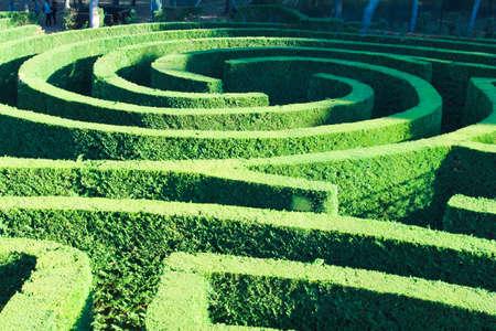 Labyrinth Plant Surface Reklamní fotografie