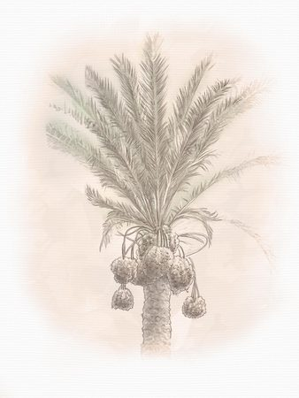 middle eastern food: Dates palm branches with ripe dates. In Old city of Jerusalem, Israel. Landscape. Illustration Stock Photo