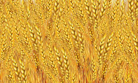 reveille: Wheat field background. Painting, illustration