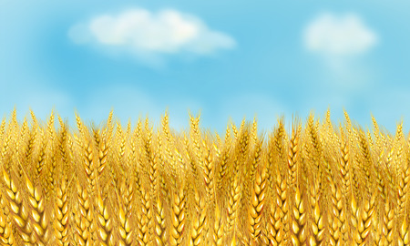 Wheat field sunset. Sky and sun, wheat field. Sun rays on horizon in rural meadow. Digital painting, illustration Stock Photo