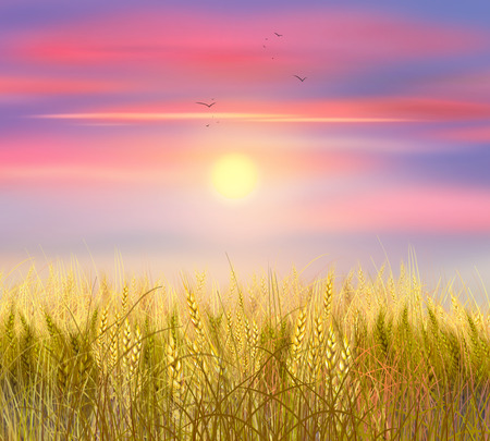 pink sky: Wheat field Sunrise. Sky clouds and sun background. Sun rays on horizon. Painting. World environment day. Ecology Stock Photo