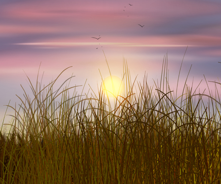 reveille: Wheat field sunset. Sky and sun, wheat field. Sun rays on horizon in rural meadow. Digital painting, illustration Stock Photo