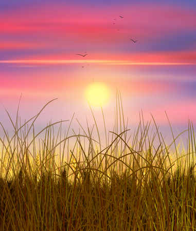 reveille: Sunset Sky and sun wheat field. Sun rays on horizon in rural meadow. Painting, illustration