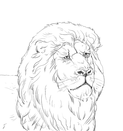 Portrait of a big African lion on white background, Africa. Hand Drawn. Realistic Illustration