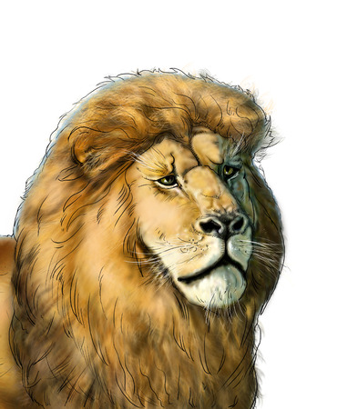 watchful: Head of a big African lion isolated on white background, Africa. Hand Drawn. Realistic Illustration Stock Photo