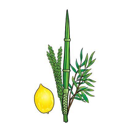 Sukkot Holiday Jewish traditional four species lulav, etrog logo isolated on white. Vector Holiday Jewish new year. Autumn Fest symbols. Art image