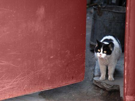 cat by the door Stock Photo